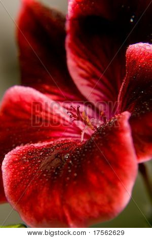 Awesome red flower macro shot