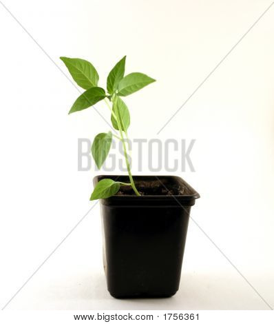 A Plant In A Flowerpot