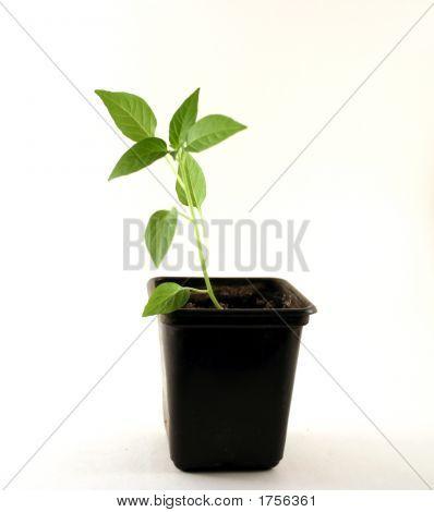 A Plant In A Flowerpot
