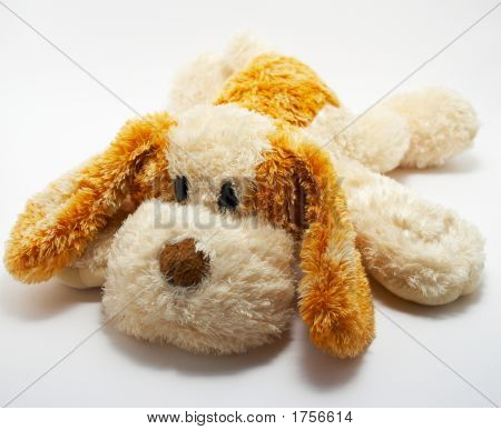 Greater Soft Dog On A White Background 1