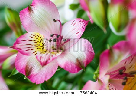 Beautiful orchid flowers macro background