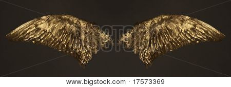 Two golden wings isolated on dark background