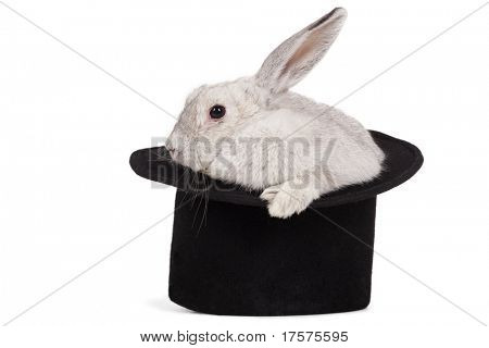 Fluffy long-eared rabbit in top hat over white background