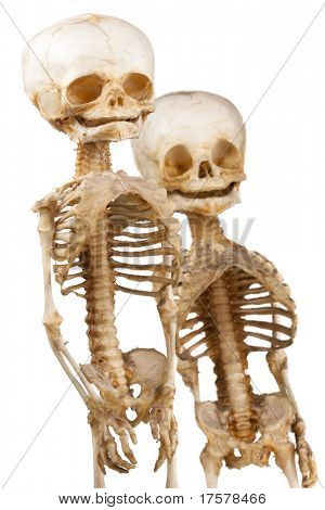 Two children's human medical skeleton over white