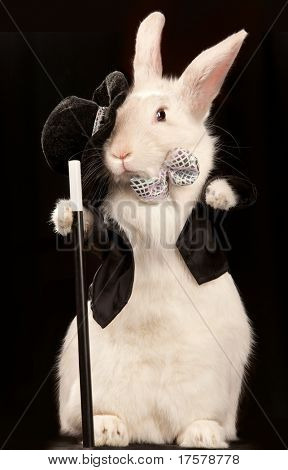 Photo of cute rabbit in top hat  and tuxedo with stick . Isolated on dark background