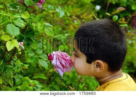 Smelling Summer