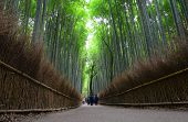Постер, плакат: Bamboo Grove At Arashiyama In Kyoto Japan