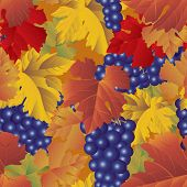 pic of grape-vine  - Vector grapes background  - JPG