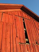stock photo of red barn  - A vintage red barn which has seen better days glows orange in late afternoon sun - JPG