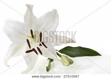 Flowers Flower Background