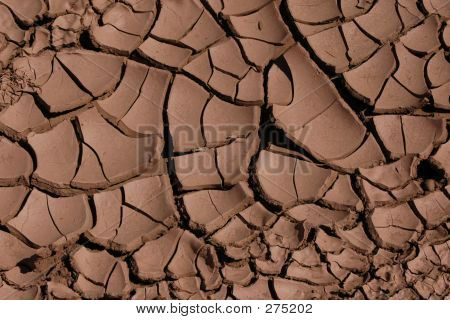Cracked Dried Mud
