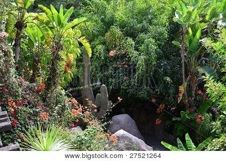 tropic landscape