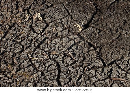 Parched Earth And Dead Plants