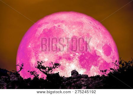 Pink Moon Back Over Plant