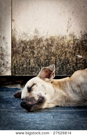 Vertical image of an old sad dog abandoned on the streets with space for text