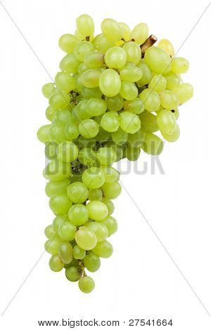 green grapes isolated shadowless on white