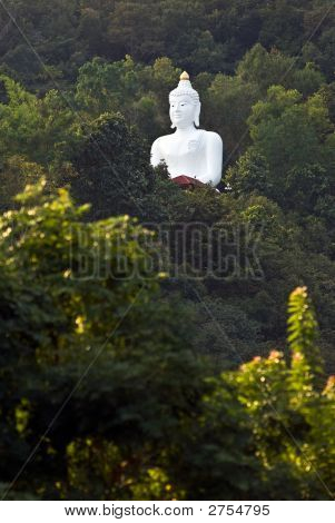 Buddhas In The Jungle