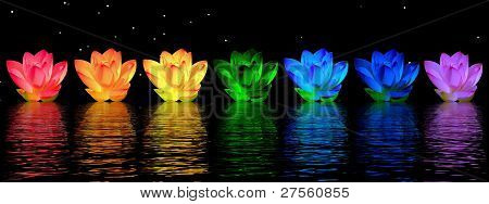 Lily flores Chakras