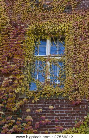 Window With Leafs