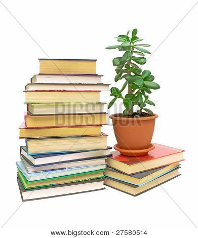 Books And A Green Plant (crassula) On A White Background