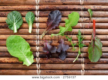 Variety Of Baby Lettuce And Greens
