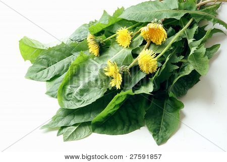 spring dandelions for tasty salad