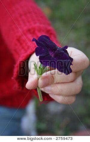 Handing Flower