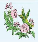 picture of colibri  - Colibri and wild flowers - JPG
