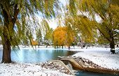 image of weeping willow tree  - Scenic winter landscape - JPG