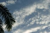 Coconut Frond In A Fluffy Clouds poster