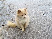 Ginger Cat On The Snow Covered Road. Concept Of Cold Weather, Snowfall In Winter Season poster