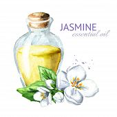 White Jasmine Flower And Essential Oil. Spa And Aromatherapy. Watercolor Hand Drawn Illustration,  I poster