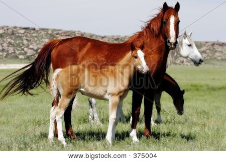 Horses And Their Young