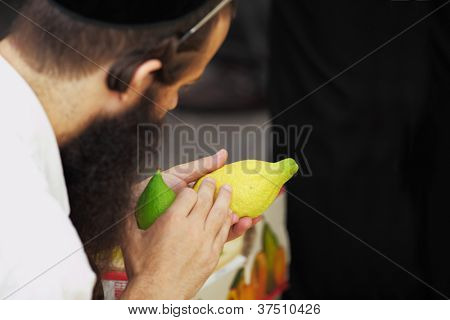 BNEI-BRAK, ISRAEL - SEPTEMBER 22: The religious Jews in a hat are choosing ritual plant citron at the market on the eve of Sukkot September 22, 2010 in Bnei Brak, Israel. This was Sukkoth market