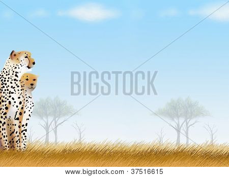 Postcard and Note Paper of Cheetahs in Safari Park Background