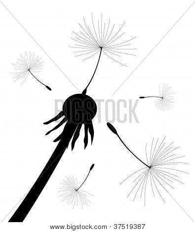 Vector Dandelion Seeds Blown In The Wind