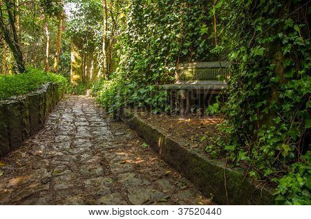 Stone Path through a Forest