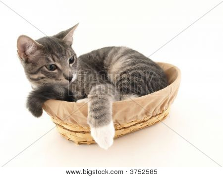 Buster In A Basket