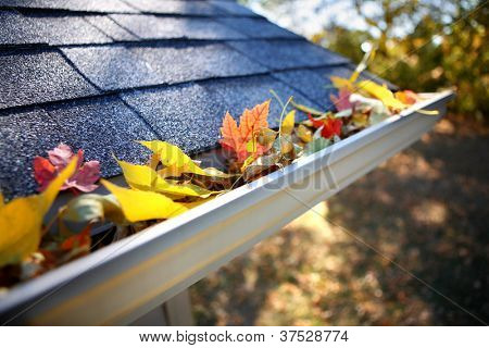 Rain gutter full of autumn leaves