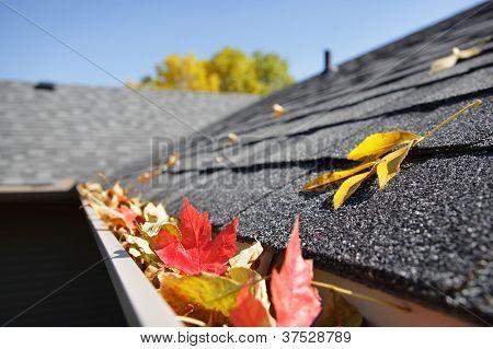 Rain gutter full of autumn leaves