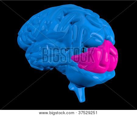 Blue brain with highlighted pink ocipital lobe on black background