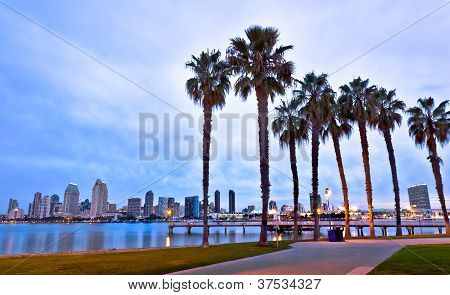 California Palm Trees and Downtown San Diego, Coronado Island Near the Ferry Landing, San Diego, Cal