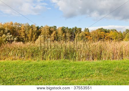Autumn Scenery With Forest And Rush Meadow