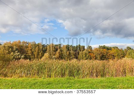 Autumn View With Forest And Rush Meadow