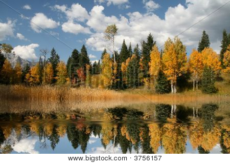 Fall Refelctions