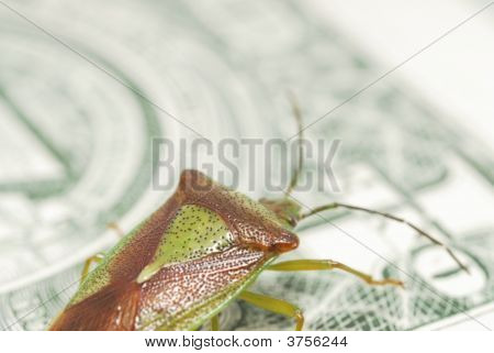Dollar And Shieldbug