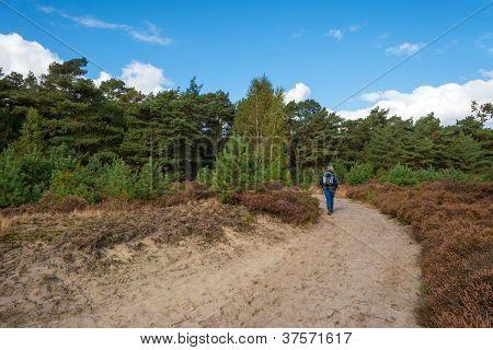 Path through heath and pines