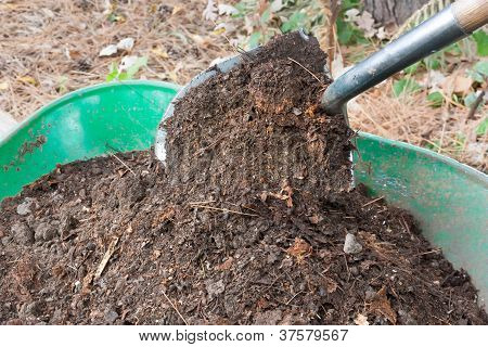 Shovel Pours Compost Into Wheelbarrow