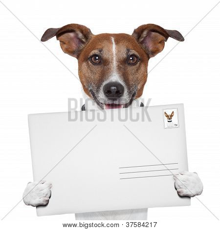 Post Envelope Mail Stamp Dog