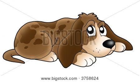 Cute Lying Dog
